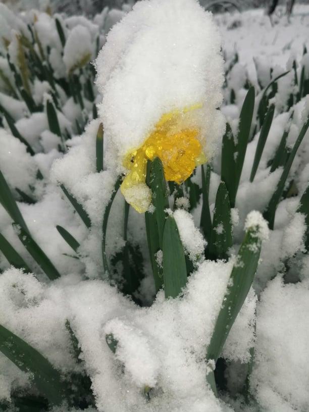 На изображении может находиться: растение, цветок, снег, на улице и природа