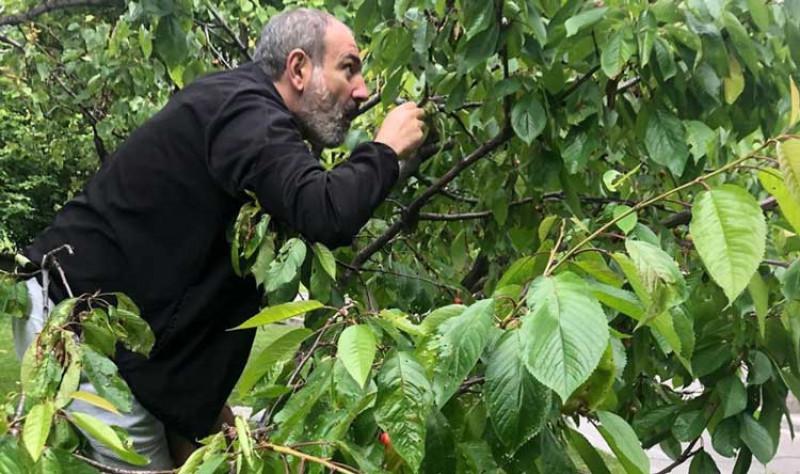 Ինչո՞ւ է Նիկոլ Փաշինյանը բարձրացել ծառի վրա (ֆոտո)